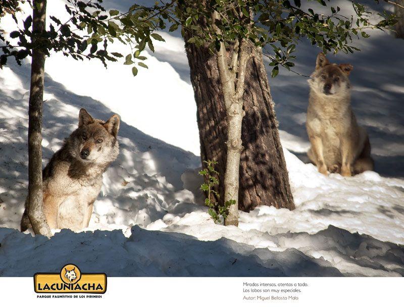 Exposición El bosque blanco, senderos llenos de vida