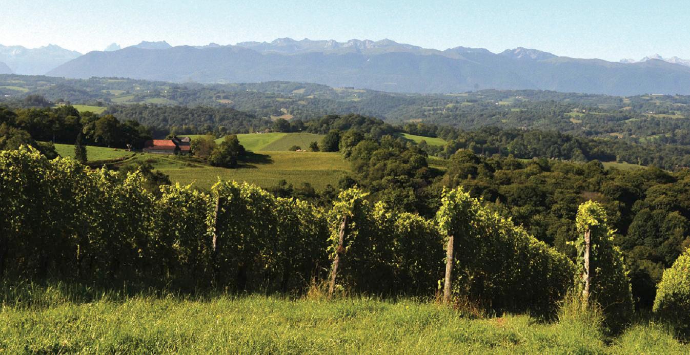 Vino Jurançon - Pau - Pyrénées