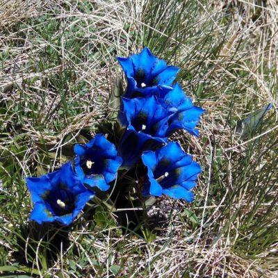 VI Jornadas de Orquideología y Flora Pirenaica en Biescas